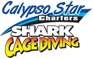 Advanced Eco Certified Shark Cage Diving Charters, Australia